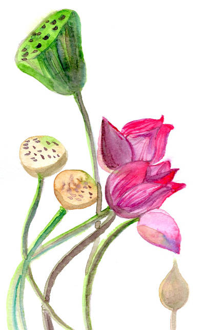 Lotus aquarelle